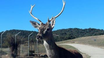 Safari Madrid, una gran aventura entre animales