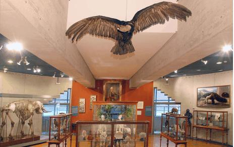 museo-ciencias-naturales
