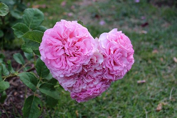 la-rosaleda